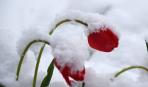 До 23 апреля потепления не будет: что ждет урожай?