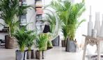 Уход за пальмой: особенности грунта и пересадки
