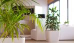 Больше кислорода: 7 лучших растений для офиса
