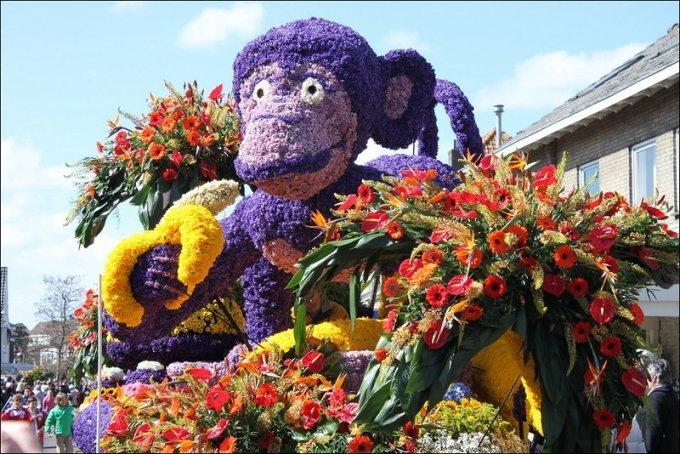 Встречай весну: конкурс цветов в Нидерландах