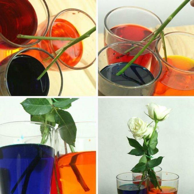 Как сделать радужную розу: полезный мастер-класс