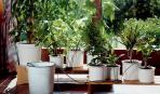 Как позаботится о растениях во время отпуска
