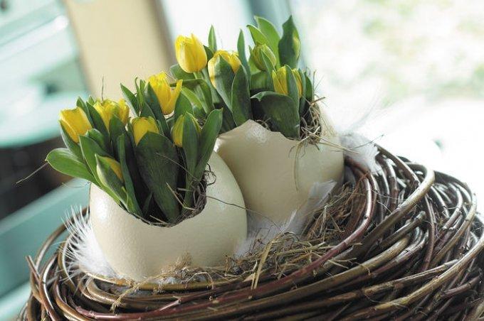 Необычное решение: рассада в яичной скорлупе