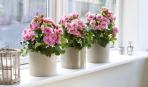 Комнатные растения: 6 секретов удачной покупки
