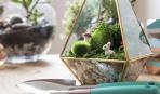 Как сделать флорариум: простая пошаговая инструкция