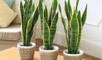 Как убрать пыль с растений: 4 простых способа