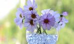 Что такое аквагрунт: особенности и способы применения