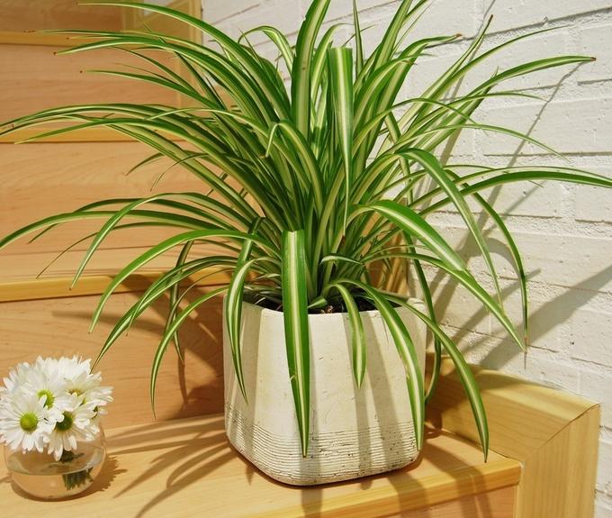 Природные кондиционеры: 5 растений для чистого воздуха в доме