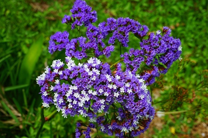 16 видов цветов, которые нужно сеять на рассаду в апреле