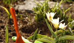 Что посадить в апреле в открытый грунт