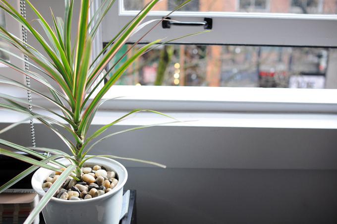 Полезные растения для дома: топ-5 зеленых помощников