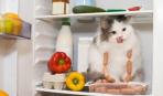 Генеральная уборка: как правильно помыть холодильник