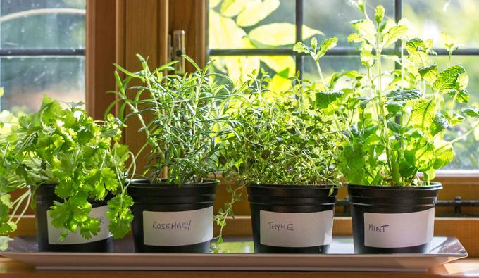 Ароматные помощники: как вырастить пряные травы