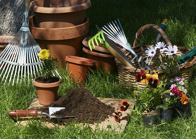 Советы огородникам: что нужно сажать в марте