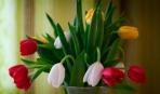 Самые красивые тюльпаны: ТОП-7 видов