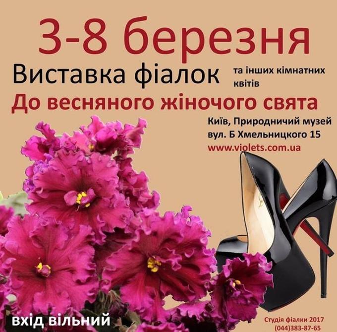 В Киеве состоится праздничная выставка фиалок