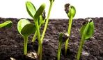Когда высаживать семена на рассаду