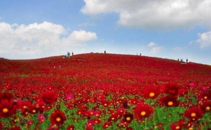 Японский национальный парк Хитачи (фото)