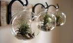 Страстный цветовод: необычные места для комнатных растений