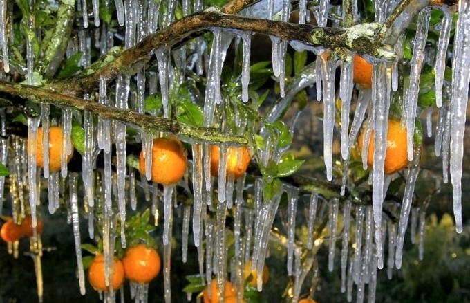 Скоро апельсиновый сок станет на вес золота