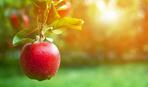 Почему нужно съедать хотя бы по 1 яблоку каждый день