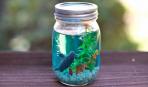 Декоративный аквариум в банке: делаем сами
