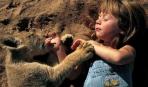 Британцы сняли самый дорогой фильм о природе (видео)