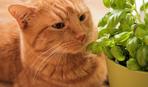Базилик на подоконнике: советы по созданию уютного садика