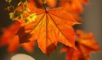 Осенние посадки деревьев и кустарников: о тонкостях и нюансах