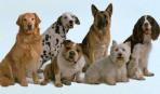 Какая порода собаки вам подойдет: часть 2
