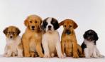 Какая порода собаки вам подойдет: часть 1