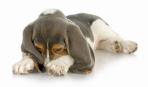 Как избавиться от запаха животных в квартире. Часть II