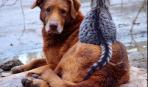 Четвероногие друзья: плюсы и минусы домашних животных