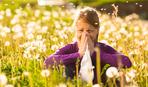 Как облегчить жизнь в сезон амброзии: советы для аллергиков
