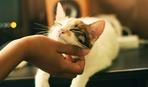 Как мы любим своих животных