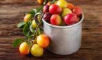 Блюда из алычи: 5 лучших рецептов