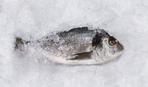 Простые советы: как распознать свежую рыбу?