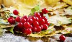 Целительница калина: полезные свойства и 5 эффективных рецептов