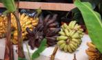 Как готовят бананы на их родине