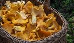 Как правильно замораживать грибы: простые советы
