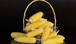 Что приготовить из свежей кукурузы? Есть идеи!