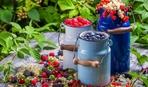 Зная эти 4 правила, вы будете собирать шикарный урожай с кустарников