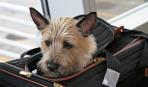 В отпуск с собакой – полезные советы для собаководов