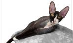 Как ухаживать за лысыми кошками