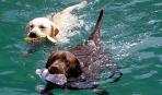 Пора купать собаку!