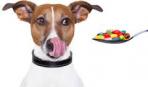 Пищевая аллергия у собак: симптомы, причины, лечение