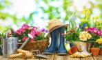 Садовые работы в мае: что не забыть сделать