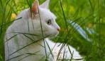 Жизнь на природе: кошка в частном доме