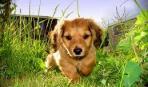Собака на даче: 9 главных правил техники безопасности