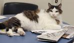 Как отучить кошку запрыгивать на стол